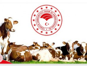 2019 Yılı Hayvancılık Destekleme Başvuruları Başladı